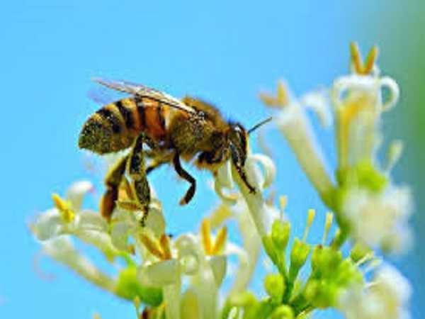 Nằm mơ thấy ong đánh con gì?