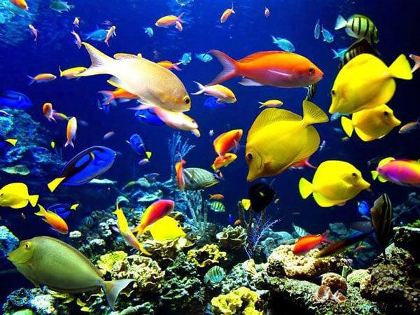 Mơ thấy cá cảnh đánh con gì?